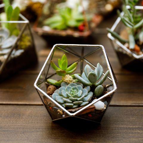 DIY gifts: how to make a terrarium