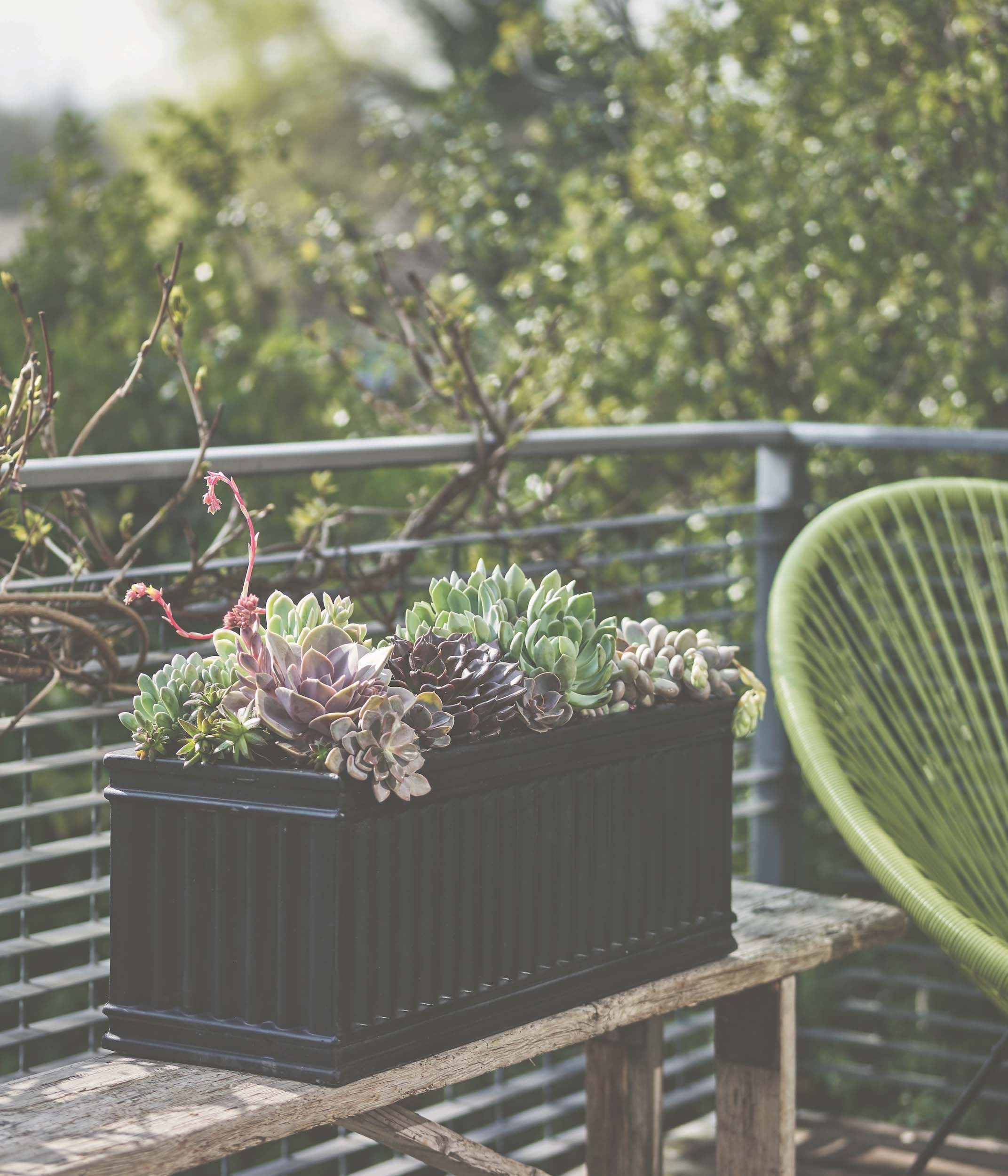 How To Plant Up A Succulent Trough Half Day Project