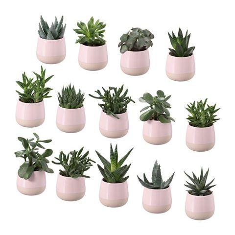 Flowerpot, Plant, Houseplant, Flower, Cactus, Grass, Succulent plant, Terrestrial plant, Flowering plant, Agave,