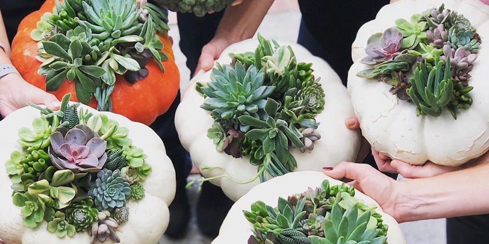 """""""Succulent Pumpkins"""" Are The Chicest Way To Show Off Your Gourd This Fall"""