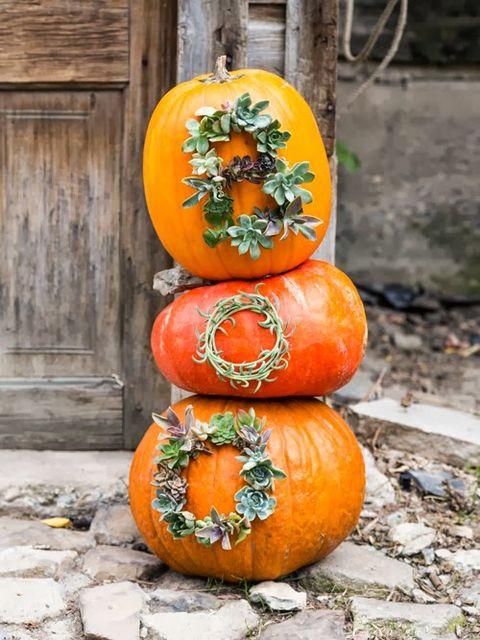 succulent pumpkins outdoor pumpkin decorations