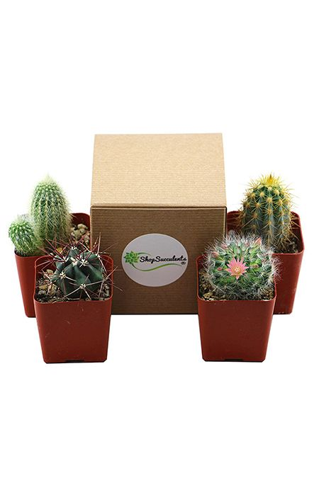 Best Father's Day Gifts - Succulents