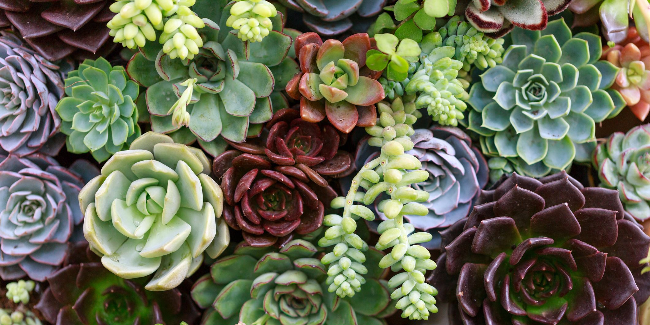 5 Mistakes You're Making With Your Succulents (And How to Grow 'Em Right)
