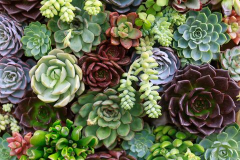 5 mistakes you re making with your succulents growing succulents