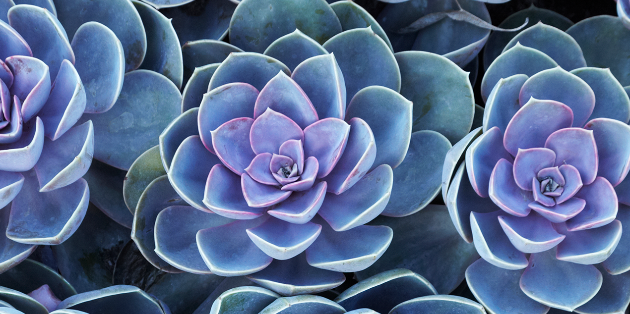 Succulents Facts 10 Things To Know About Caring For