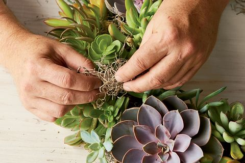 filling a succulent wreath with moss