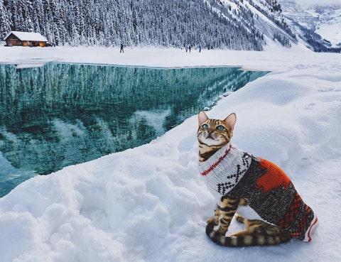 Snow, Geological phenomenon, Winter, Freezing, Glacial landform, Wilderness, Felidae, Mountain, Cat, Ice,