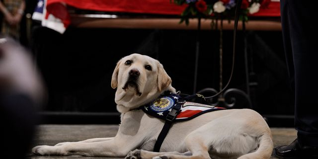 George H. W. Bush's Service Dog Sully Has Been Honored with a Statue
