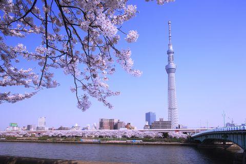 Sumida Park, Sumida River and Tokyo Sky Tree