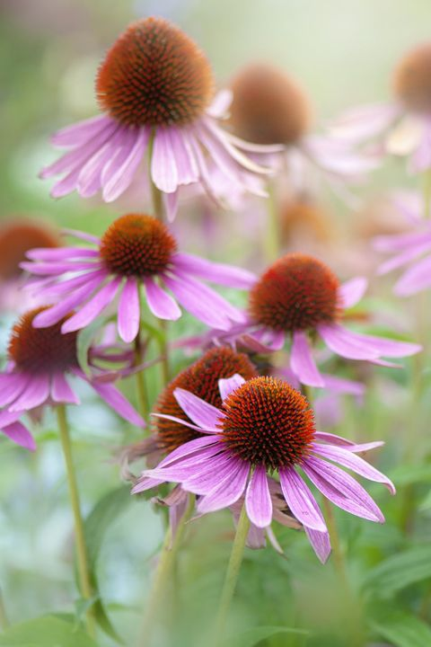 30 Flowers That Bloom In Summer Annuals And Perennials For Late