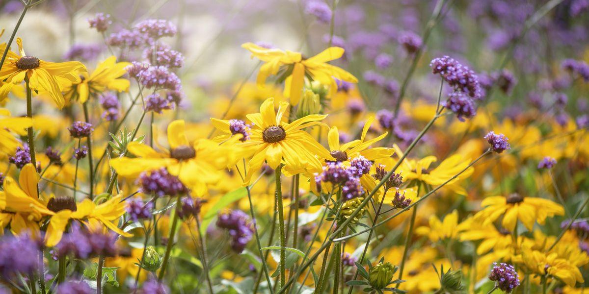 Planting Plants: Colourful Garden Plants For Contrast ...