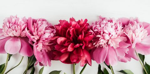 summer floral background with pink and red peonies royalty free image