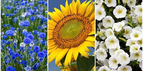 Fast growing flowering seeds