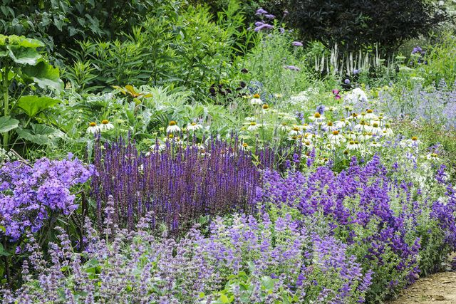 summer garden borders