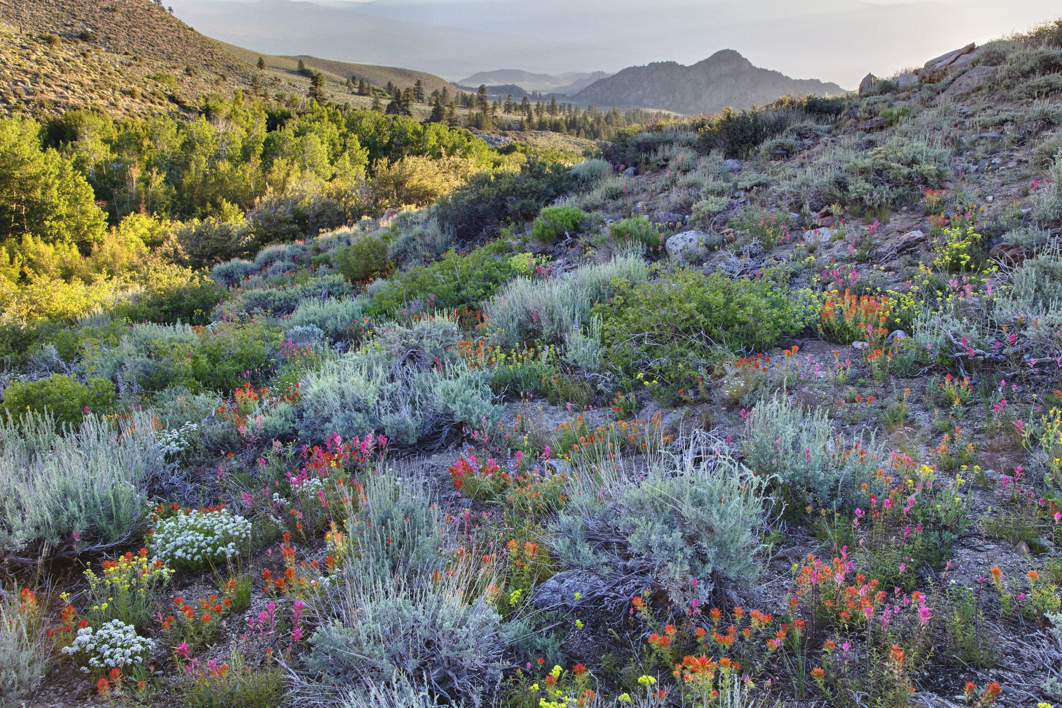 California is Having Another Lesser Known Super Bloom—This Time in The Mountains