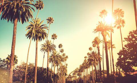 Sun shining on palm trees