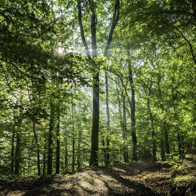 uk woodlands pushed to crisis point amid wildlife decline, new report warns