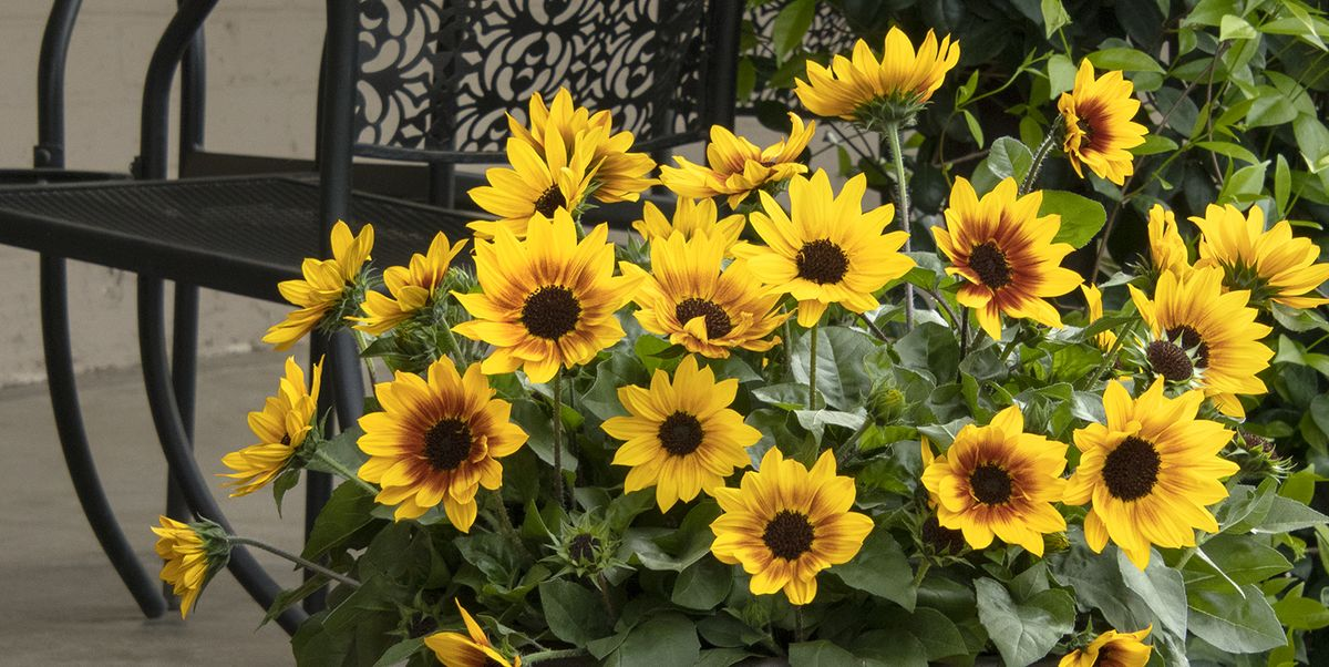 30 Best Summer Flowers Beautiful That Bloom All