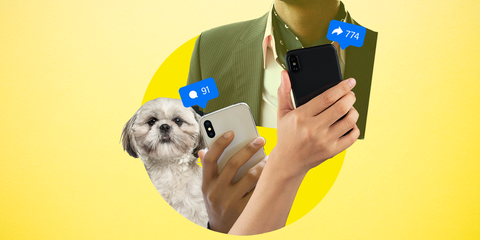 Shih tzu, Dog, Canidae, Dog breed, Companion dog, Snout, Photography, Technology, Puppy, Selfie,