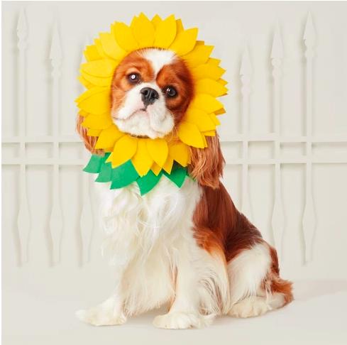 e0e63533773e4 35 Funny Dog Halloween Costumes - Cute Ideas for Pet Costumes
