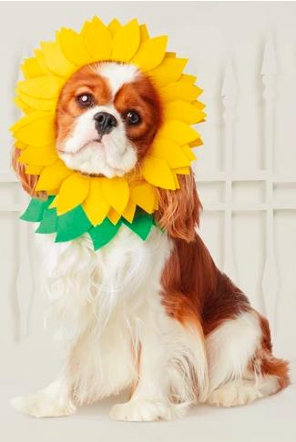 sunflower dog halloween costume