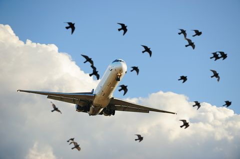 Sunlit airplane taking off, birds close up