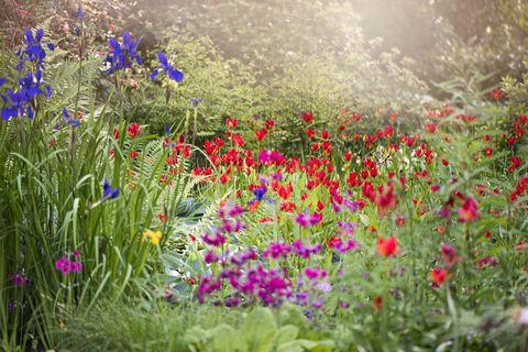 Garden Trends - Cover