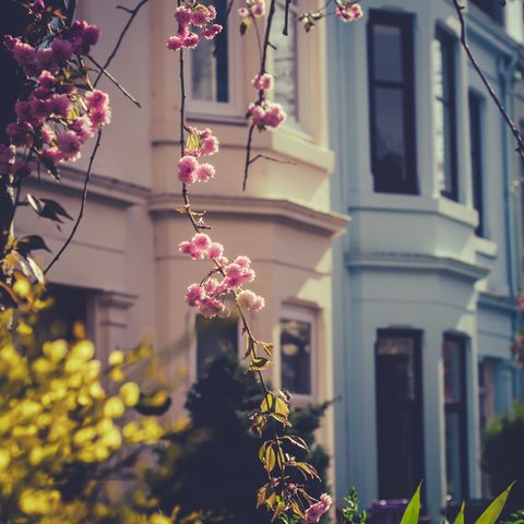 Sunny Springtime Street in Glasgow, Scotland, UK