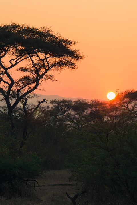 Sunrise over an African landscape.