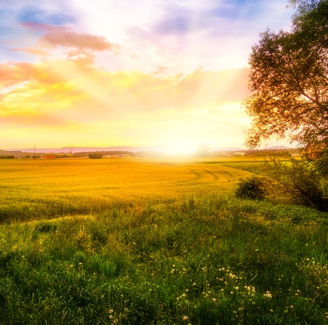 The sun rises over a country field