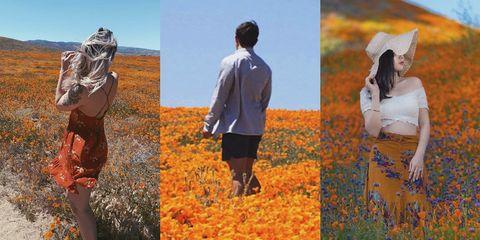 People in nature, Orange, Collage, Adaptation, Photography, Plant, Art, Autumn, Tundra,