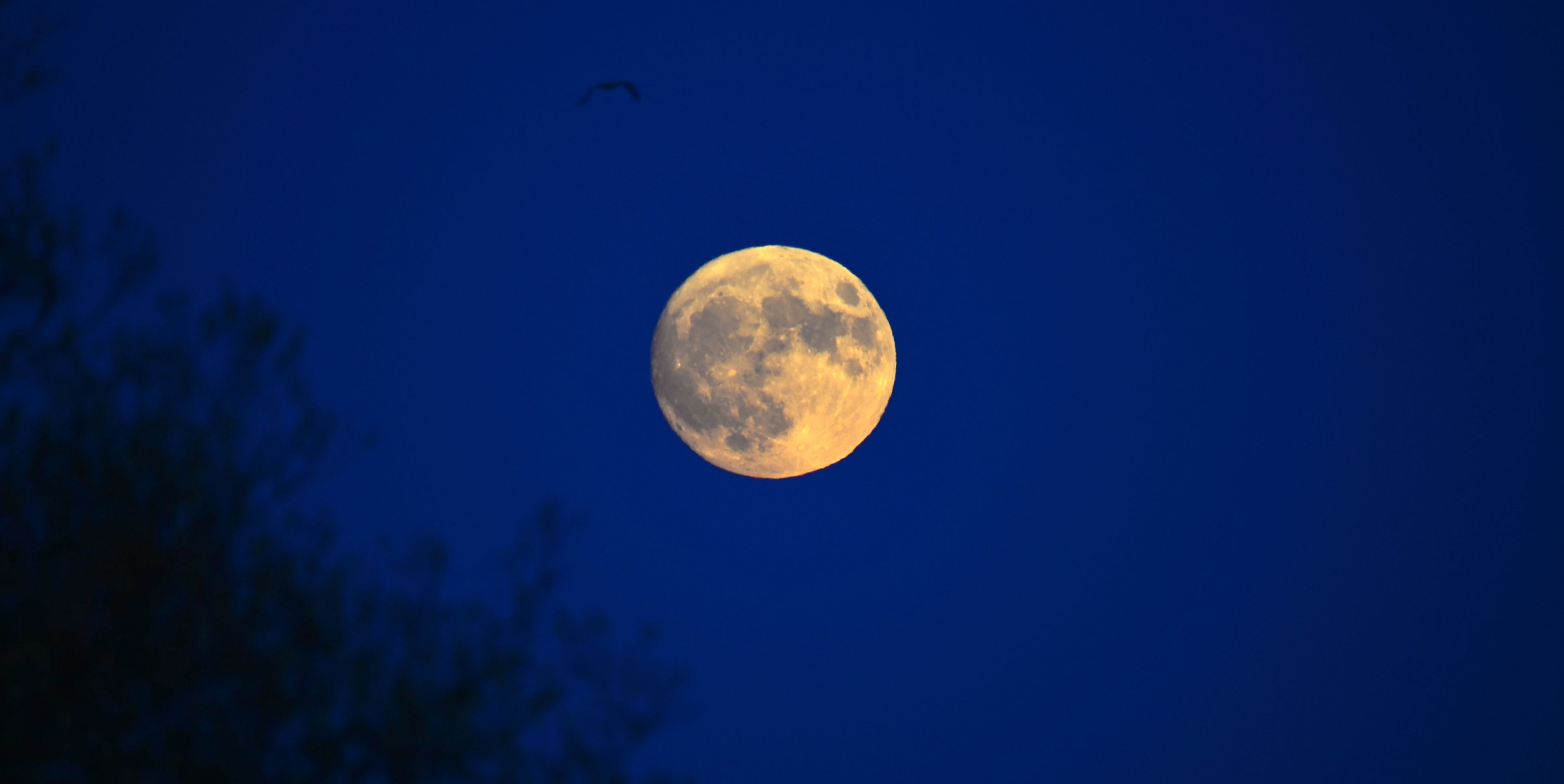 A full and bright Beaver's Moon will light up the sky tonight