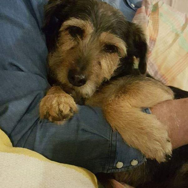 Dog owner left devastated after parkrun disaster