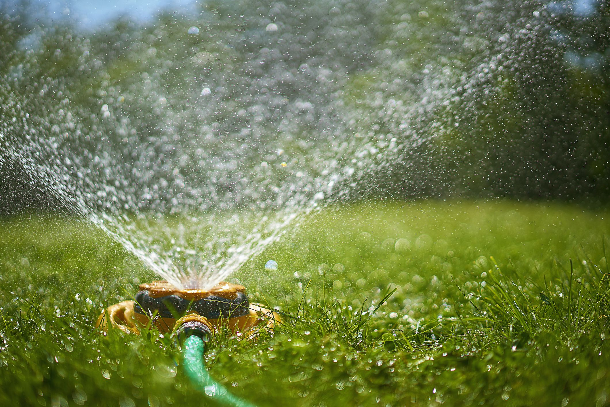 Best Time to Water Grass - Lawn Watering Tips