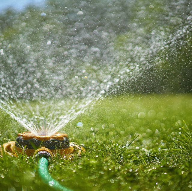 Best Time To Water Grass Lawn Watering Tips
