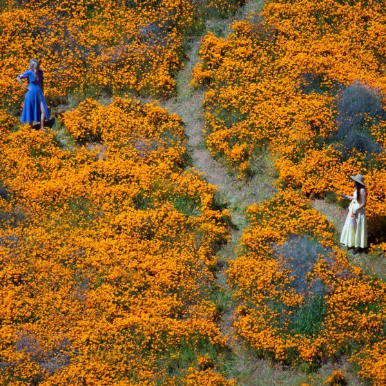 Rare Super Bloom at California's Lake Elsinore Ruined By Selfie-Seeking Instagrammers