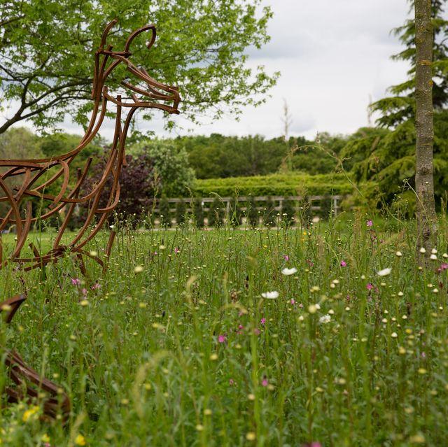 garden with wildflowers
