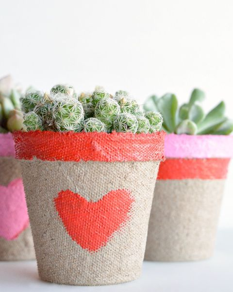 succulents with a planter featuring red and pink hearts