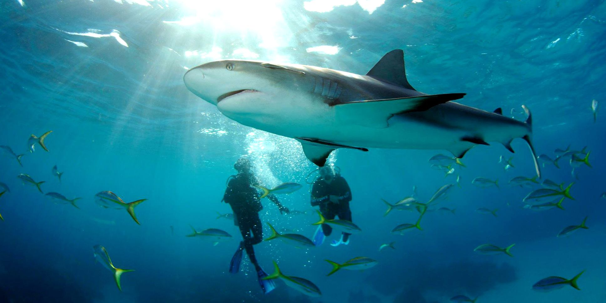 Best photos of the year shark 2020 great white