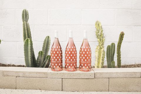 Flowerpot, Cactus, Houseplant, Pink, Botany, Plant, Flower, Xanthorrhoeaceae, Ceramic, Peach,