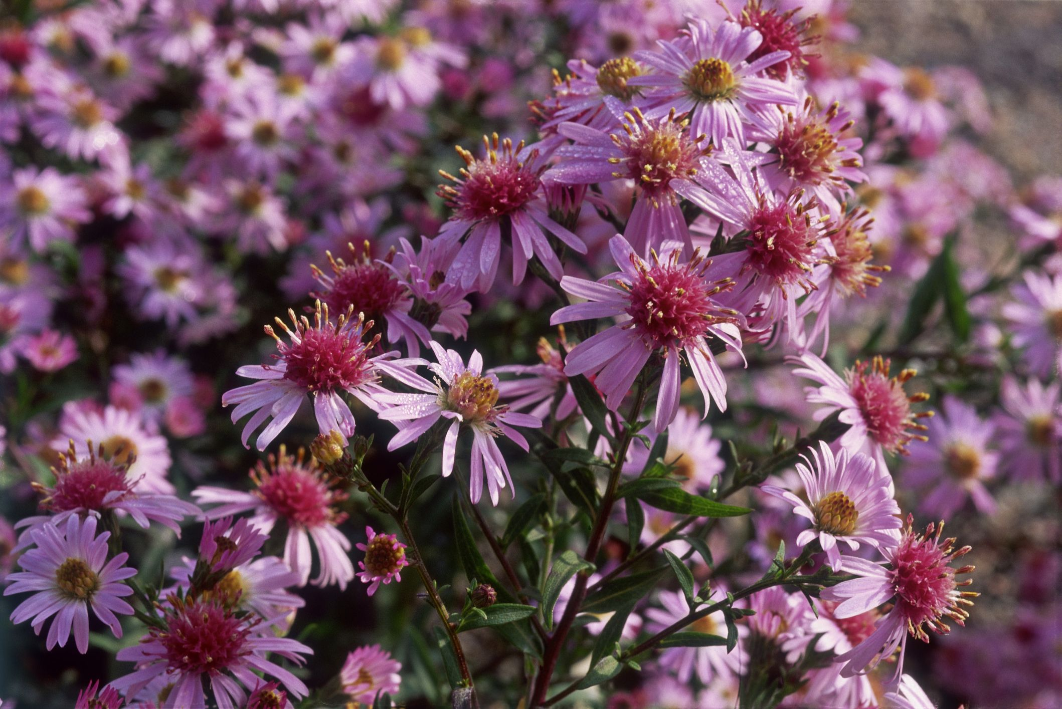 15 of the best plants for a beautiful summer garden border rhs 15 of the best plants for a beautiful summer garden border rhs designers top garden border plants izmirmasajfo