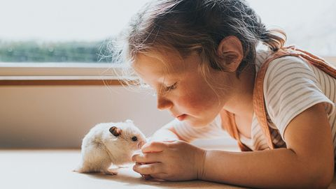 syrian hamster and a girl against a window