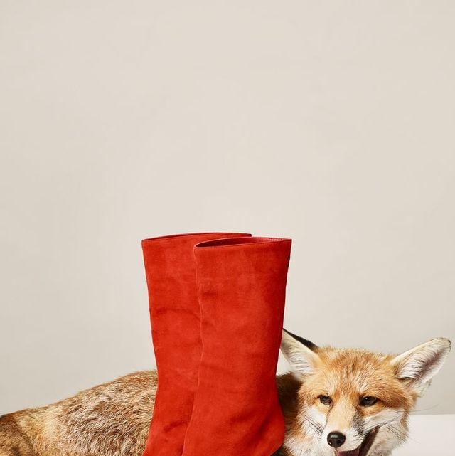 Canidae, Mammal, Dog, Carnivore, Footwear, Shoe, Pembroke welsh corgi, Fur, Shiba inu, Fox,