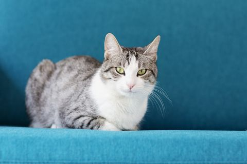 tabby cat sitting on sofa