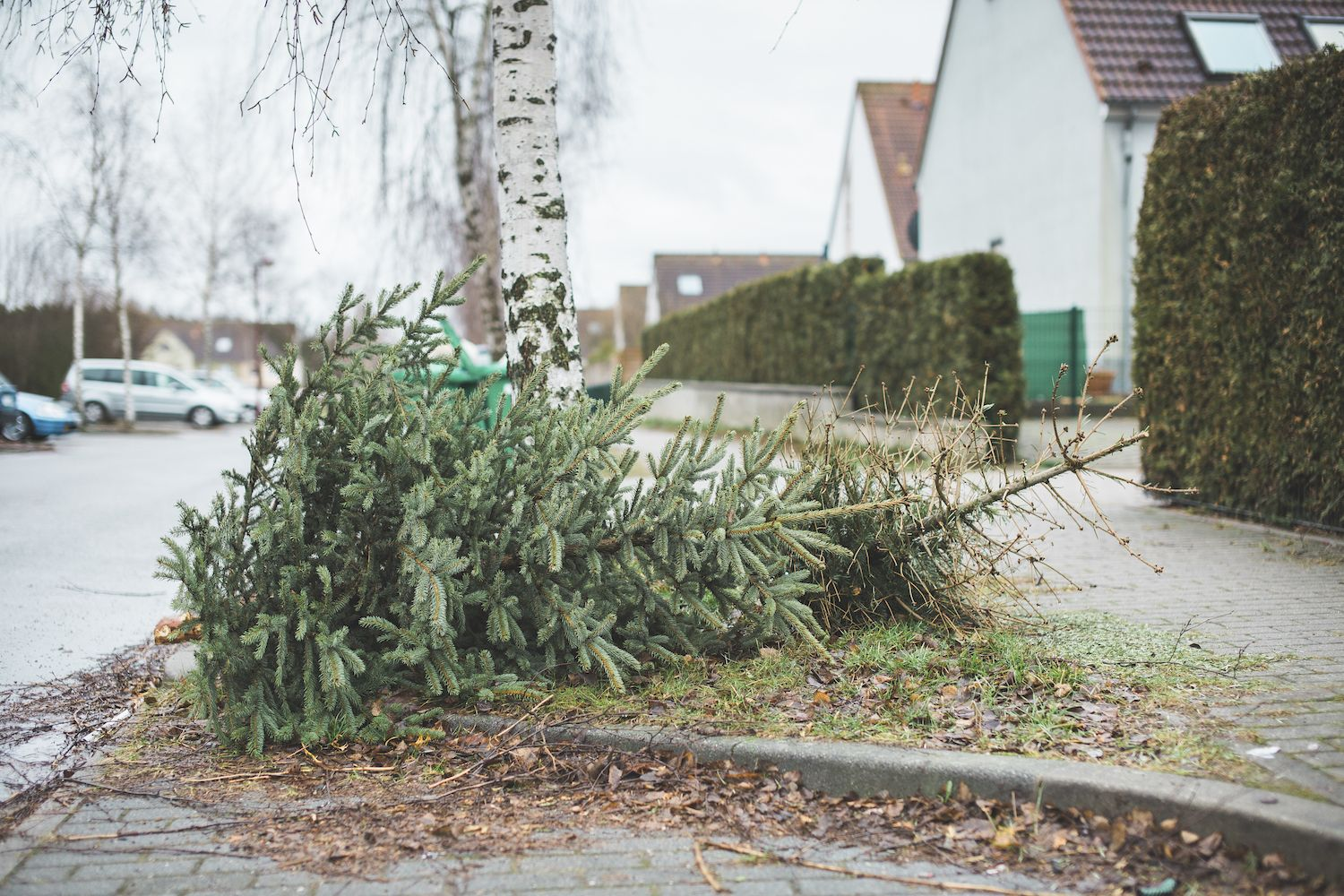 When Should You Take Your Christmas Tree Down? The Answer Will Definitely Surprise You