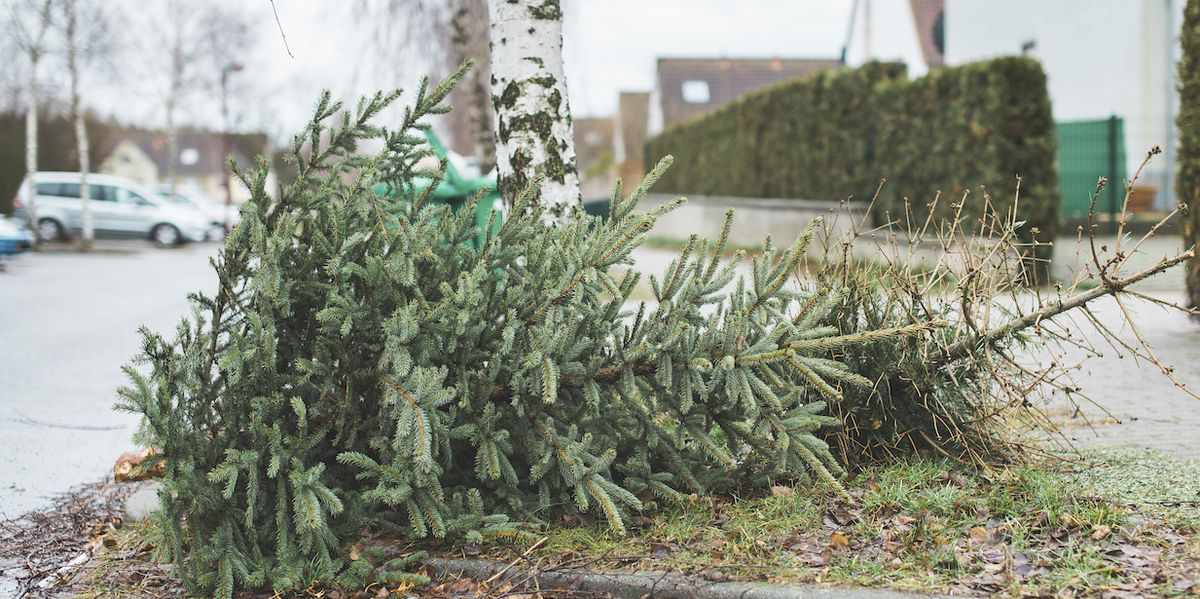 When To Take Your Christmas Tree Down, According To Tradition