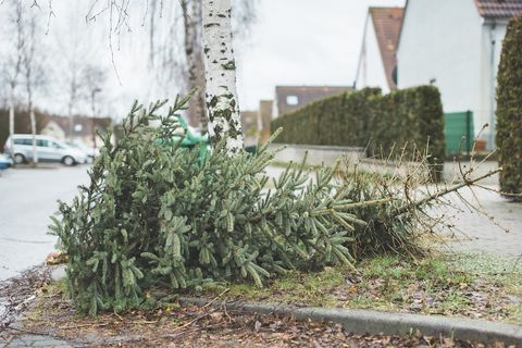 When Should You Take Down Christmas Tree.When To Take Your Christmas Tree Down According To Tradition