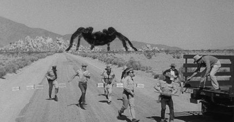 tarantula gigante en el desierto