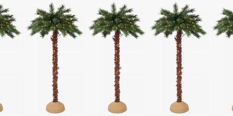 Tree, Palm tree, Arecales, Date palm, Plant, Woody plant, Desert Palm, Attalea speciosa, Fruit, Terrestrial plant,