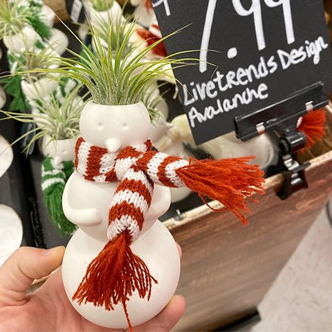 Plant, Snowman,